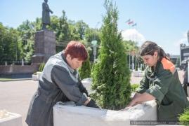 Более двухсот туй украсили центральную городскую площадь ко Дню Независимости